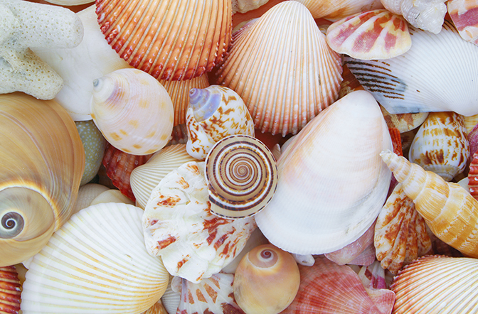Fantastic Shells and where to find them