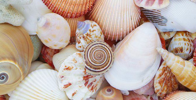 For each answered survey you receive Shells to redeem in our online shop.