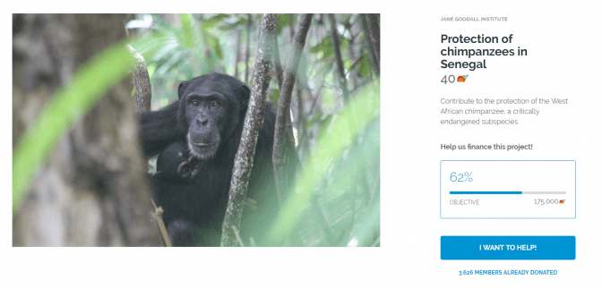 Protection of chimpanzees in Senegal