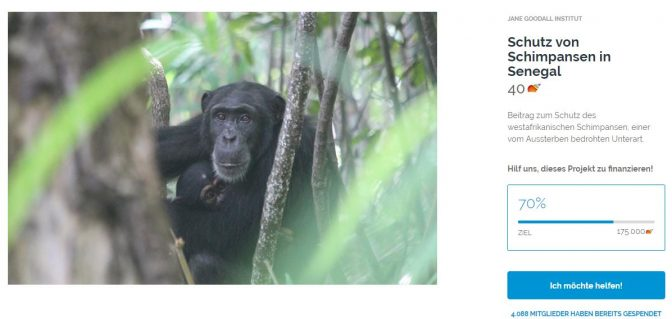 Schutz von Schimpansen in Senegal