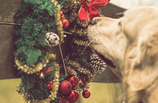 Weihnachtsvorbereitung für Frühaufsteher