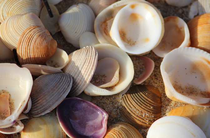 You haven't received your Shells after a survey? Read this!