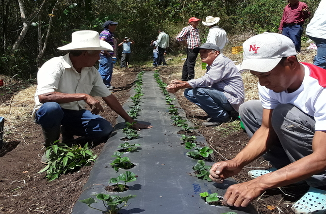 Sustainable agriculture in Nicaragua with Action against Hunger