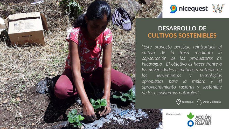 Gracias a tu aportación se podrá apoyar a productores de fresas miembros de cooperativas agrícolas en Nicaragua en nuevas áreas con potencial productivo.